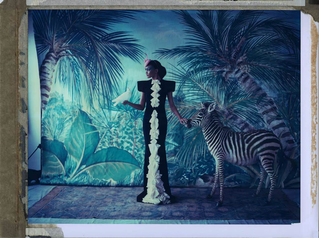 Fine art color photography of a fashion model wearing haute couture by Stephane Rolland and hat by Philip Treacy, with dove and stuffed zebra. Hand-painted backdrop with jungle.