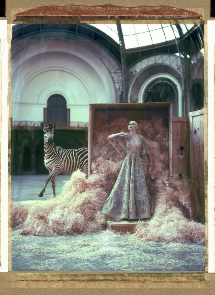 Fine art color photography of a fashion model wearing haute couture by Valentino with stuffed zebra and lion, at the Grand Palais, Paris.