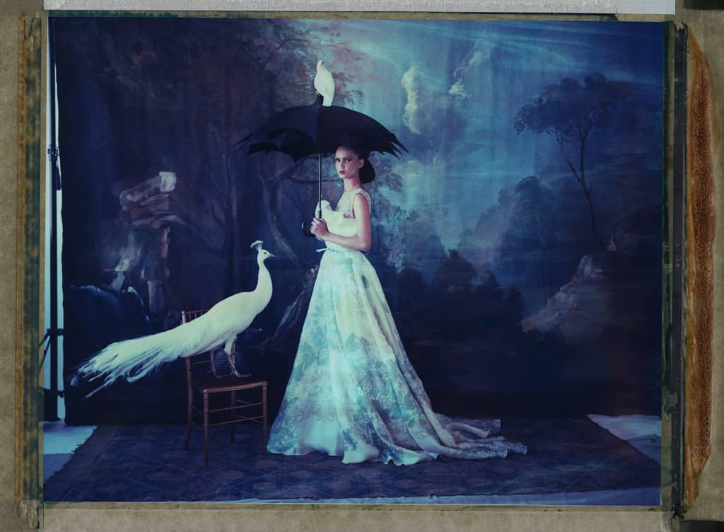 Fine art color photography of a fashion model wearing haute couture by Elie Saab with dove and peacock. Hand-painted backdrop with forest.