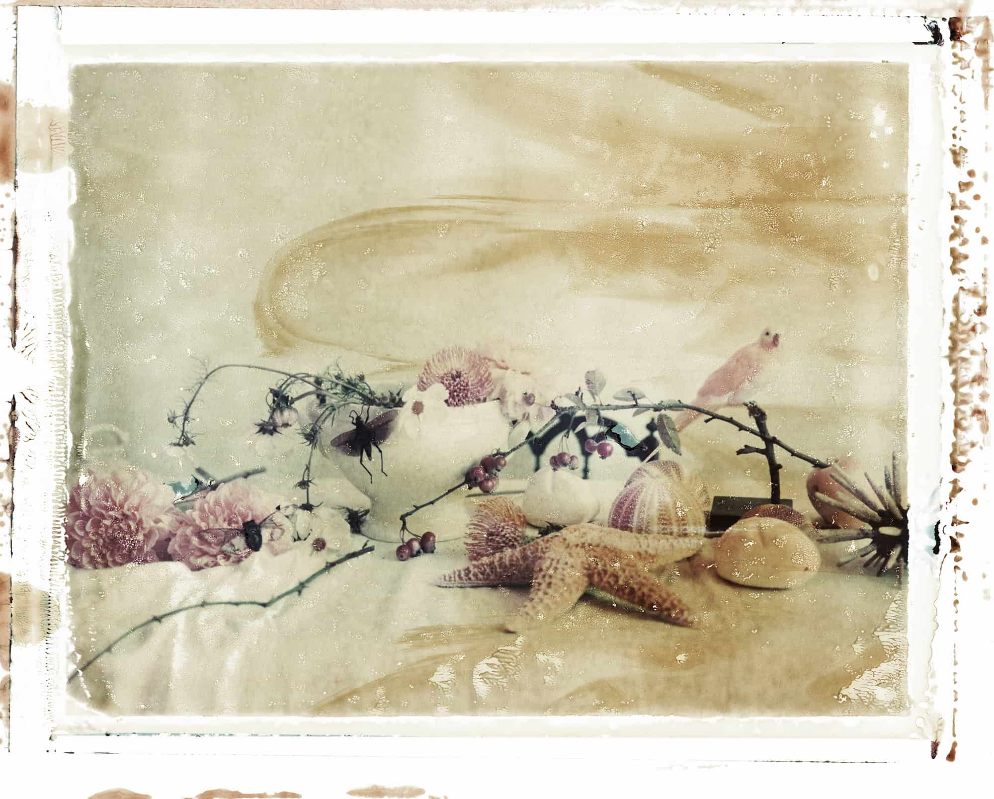 Fine art color photography of still life with flowers, sea shells, starfish, canary and insects. Inspired by Japanese paintings.