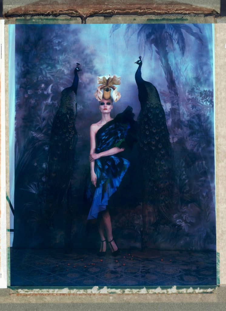 Fine art color photography of a fashion model wearing haute couture by Jean Paul Gaultier and hat by Philip Treacy, with two peacocks. Hand-painted backdrop of jungle.